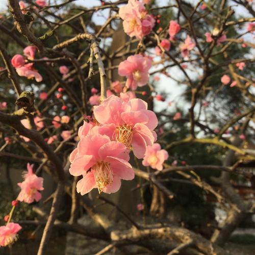いよいよ明日は神奈川県公立高校入試。受験生の皆さん頑張れ!!
