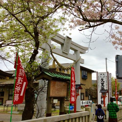 葉桜になりつつあります。